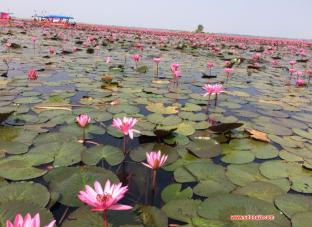 lotus lake 3