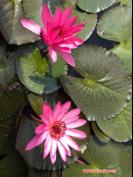 lotus lake 8