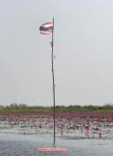 lotus lake 9