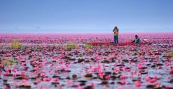 lotus lake10