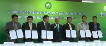 Thailand plans to host the first World Ganja Festival