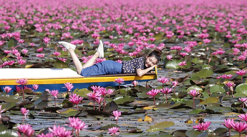 "One of the highlights of visiting Udon Thani province in northeastern Thailand is the so-called ""Red Lotus Sea"" or Talay Bua Daeng"