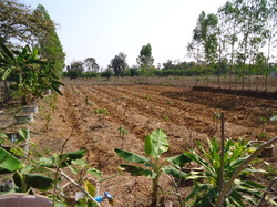 Farm Land for sale in UdonThani
