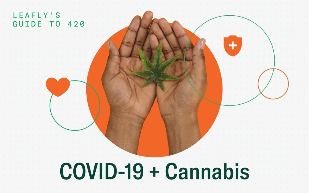 CBD and THC could be used to treat the symptoms of COVID-19